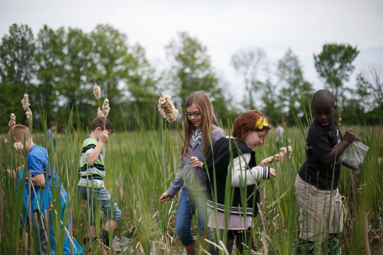 students exploring the wetlands